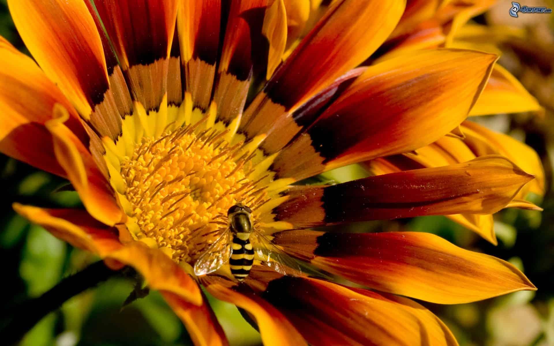 ape-sul-fiore-163074