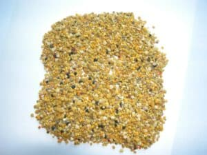 foto2-polline