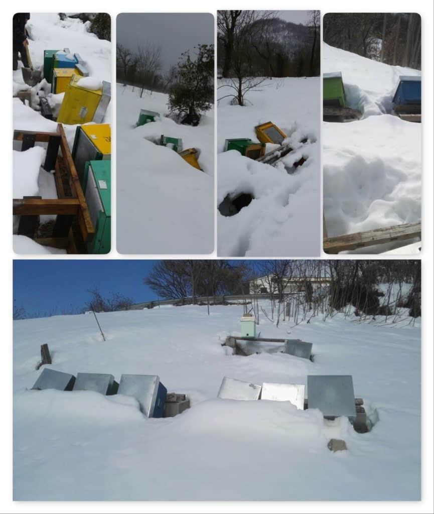 collage-foto-assapira-terremoto-neve