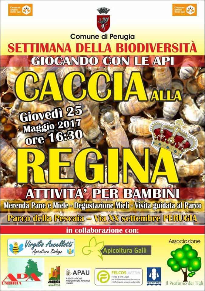 170525-Caccia-alla-Regina-Ancellotti