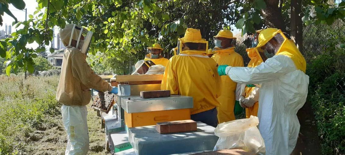 visita in apiario